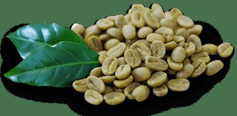 Qué es el café verde